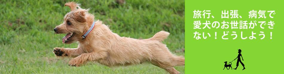 旅行、出張、病気で愛犬のお世話ができない!どうしよう!