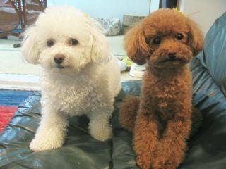 Miyu & Nico
