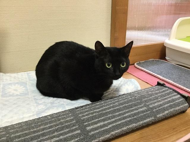 ミミちゃん(ペットシッタートコトコ)