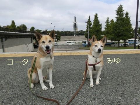 みゆちゃん&コータちゃん(ペットシッタートコトコ)