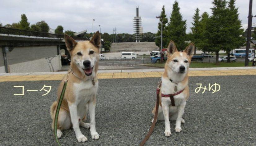 みゆちゃん&コータちゃん